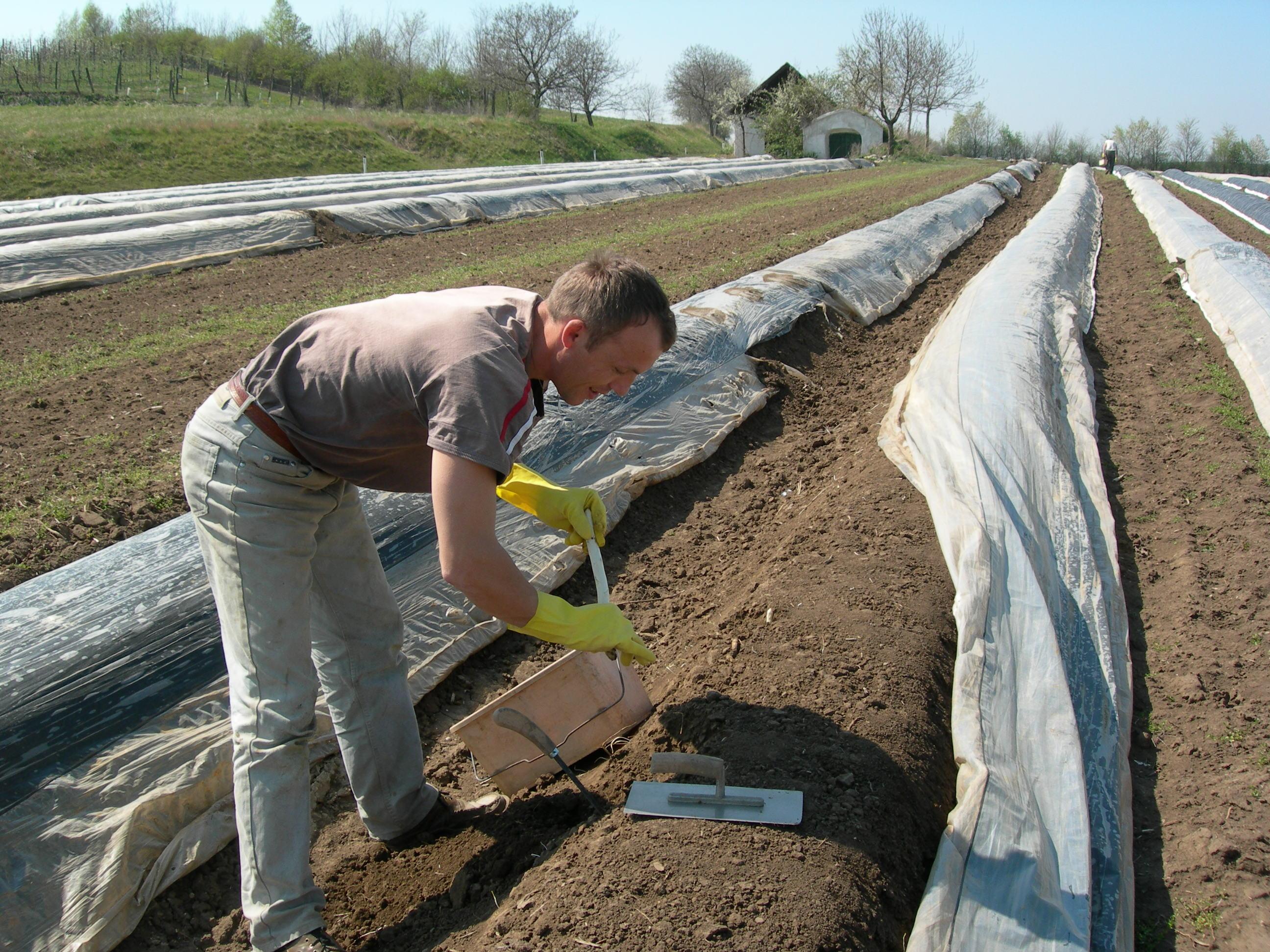Landarbeiter am Gemüseacker