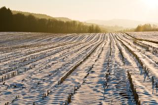 Geernteter Acker im Winter