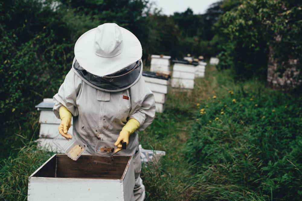 Bienenwirtschaft